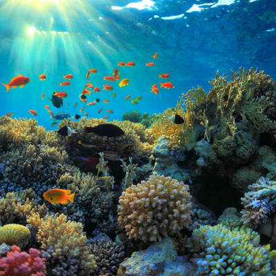 Multi-colour coral reef and fish